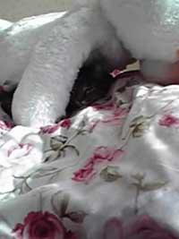 kitty08-11-14_002.jpg